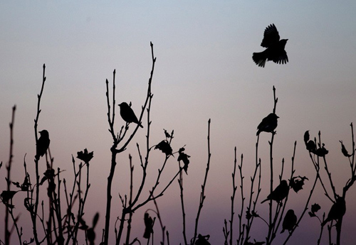 silhouettes_in_nature